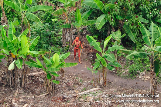 photograph of man covered in red dye in amazonian forest garden