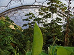 view across the eden project rainforest biome