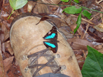 butterfly sitting on boot