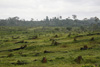 picture of land cleared for palm oil
