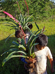 children carrying flowers from the forest to sell