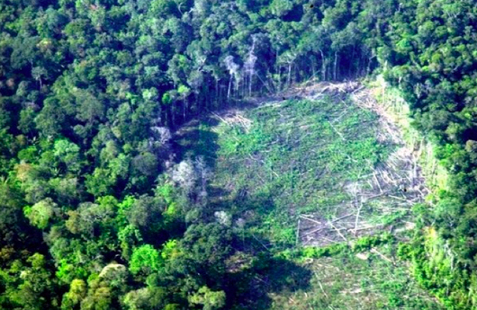 pristine rainforest in Colombia damaged by cocaine production