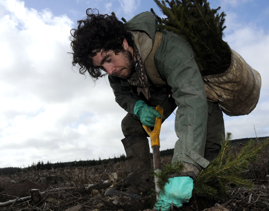 Tree planting in Kielder Forest