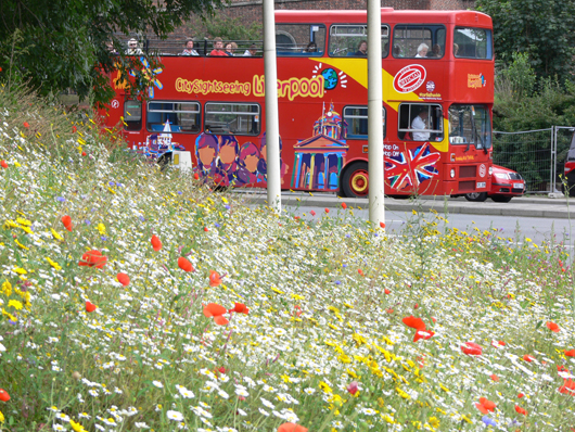 bus and wildflowers