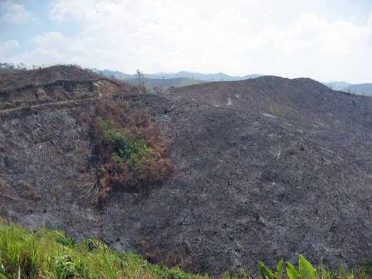 a mountain slope which has been burnt by fire for agriculture