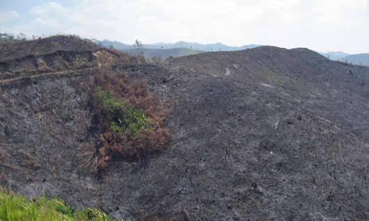 mountain in honduras that has been recently burnt for agriculture