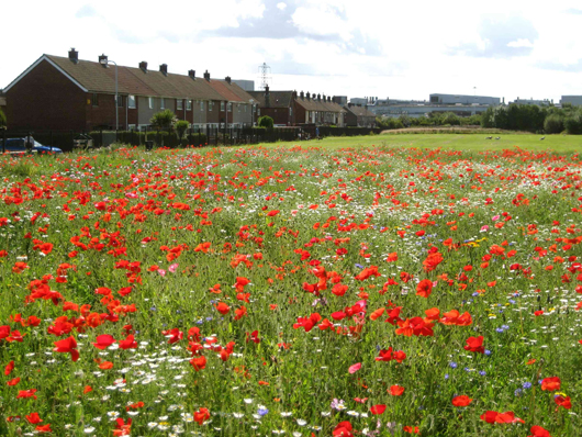 flower meadow and housing estate