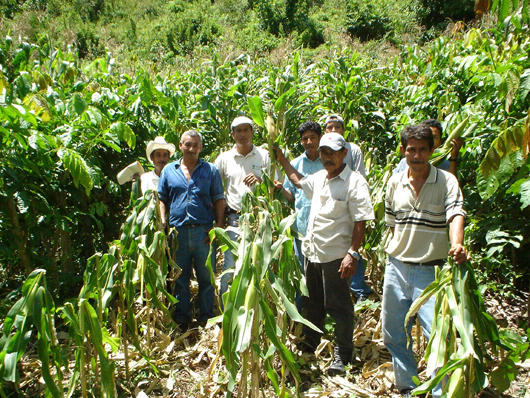 group of farmers in a maize crop