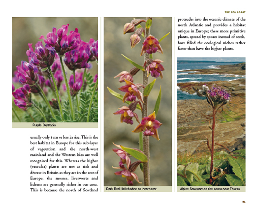 pages from wildflower book
